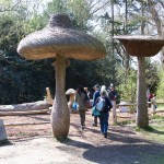 Willow (Magic?) Mushrooms