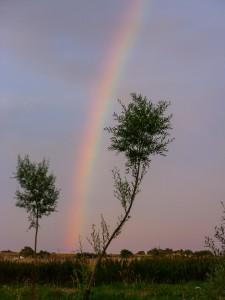 Pineham Field Trip 11Aug15 - rainbow