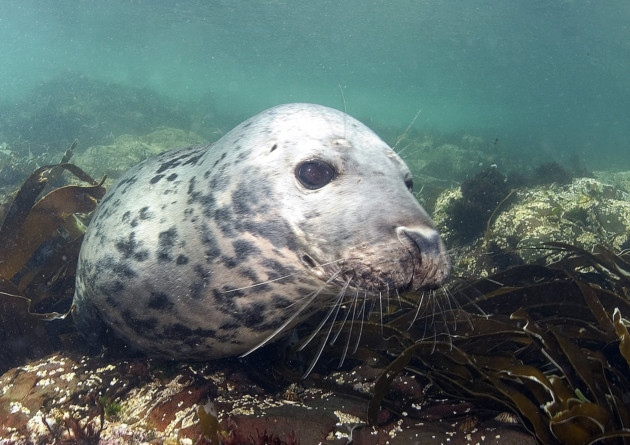 Save The Wildlife Of The Irish Sea