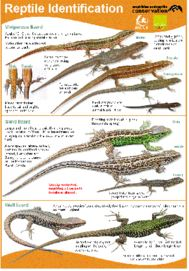 Reptile Identification Chart icon
