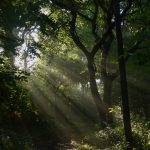 Morning sunlight in Howe Park Wood by Harry Appleyard 26 August 2016