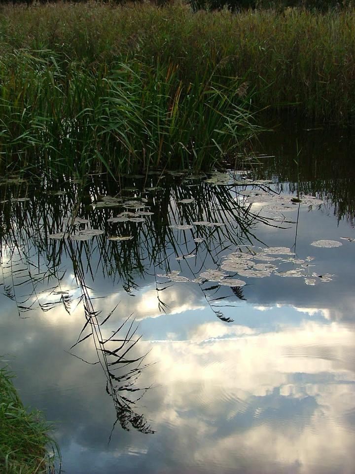 Reflection by Julie Lane