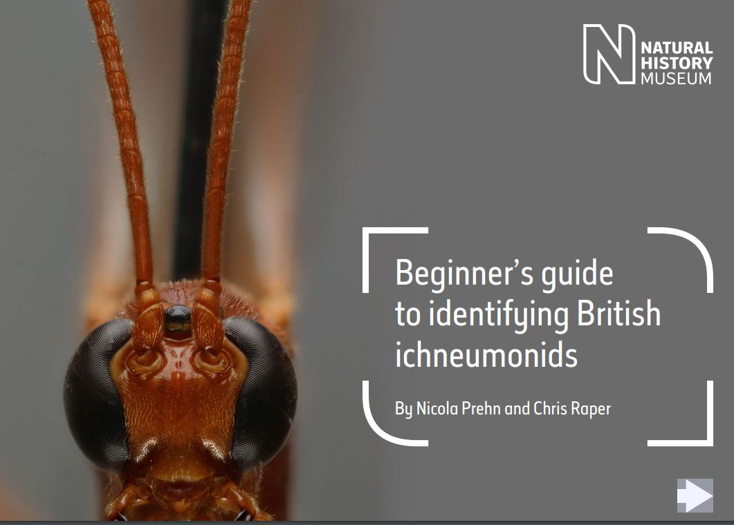 Beginner's guide to identifying British ichneumonids
