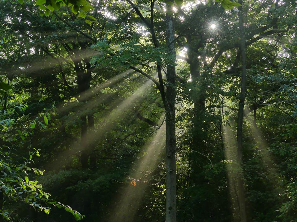 Morning Sunlight ©Harry Appleyard, Howe Park Wood 15 August 2017