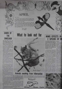 Article written by MKNHS member for the Stony Stratford and Wolverton Standard on Friday 13th April 1973 (note use of the Magpie logo)