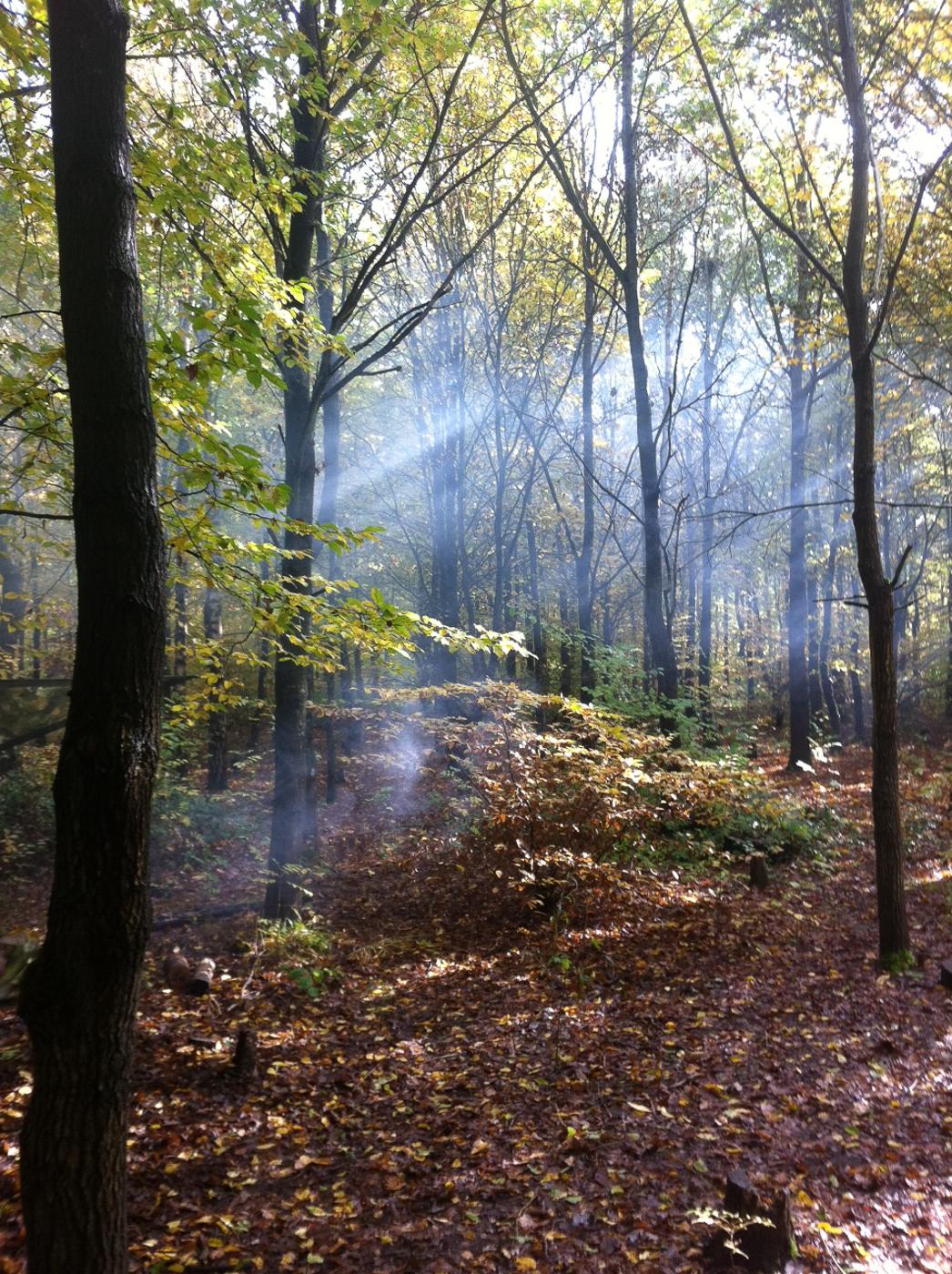 Third Place. Sunlight in Howe Park Wood by Arthur Allen