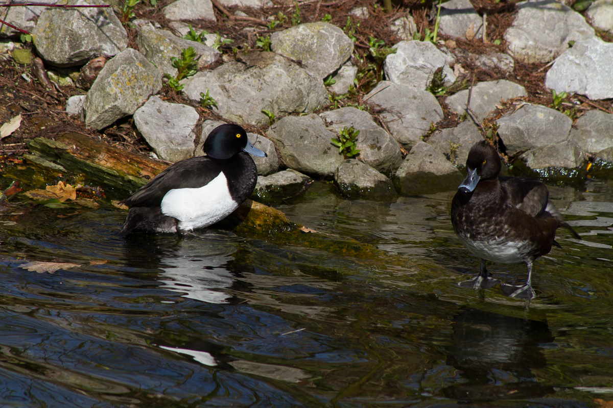 by Peter Hassett, Kew Gardens, 12Apr15