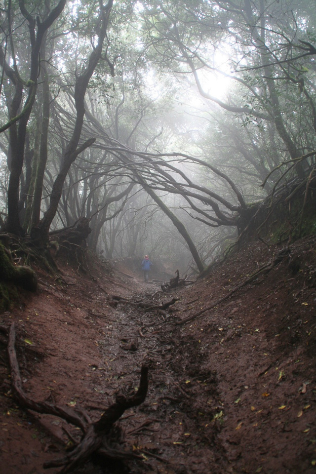 Laurel Forest in Anaga Park, Tenerife by Jean Cooke