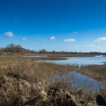 Floodplain Forest NR by Peter Garner, 25 March 2016