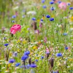 wildflowers-feature-630x400