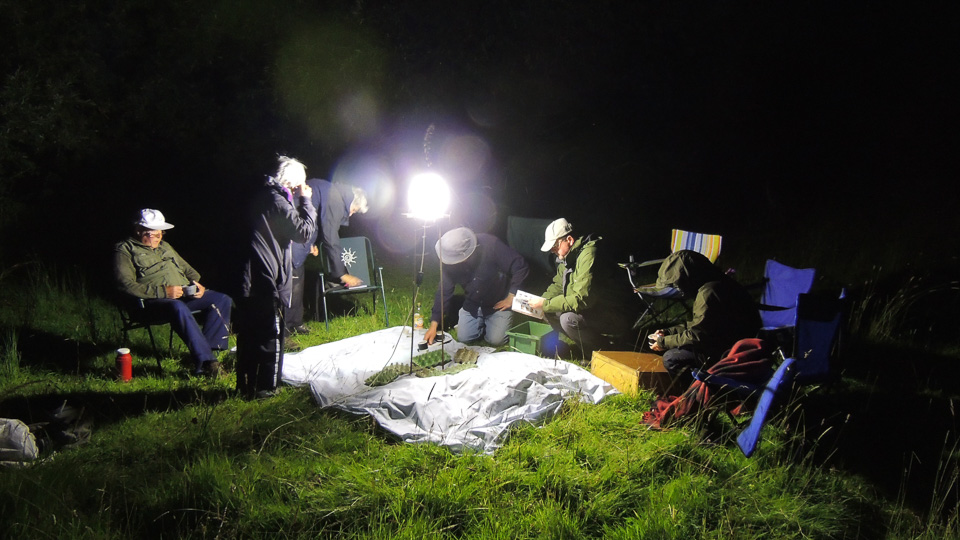 Members of the Society mothing by Julie Lane. Linford Lakes NR 9 July 2016
