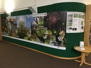 MKNHS Photo Exhibition in Milton Keynes Library July 2017