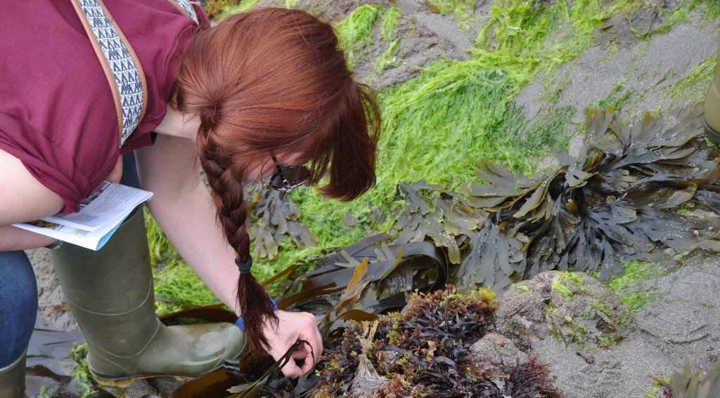 Natural History Museum Rockpooling research